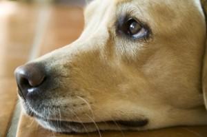 Gilpa.dk hundefoder